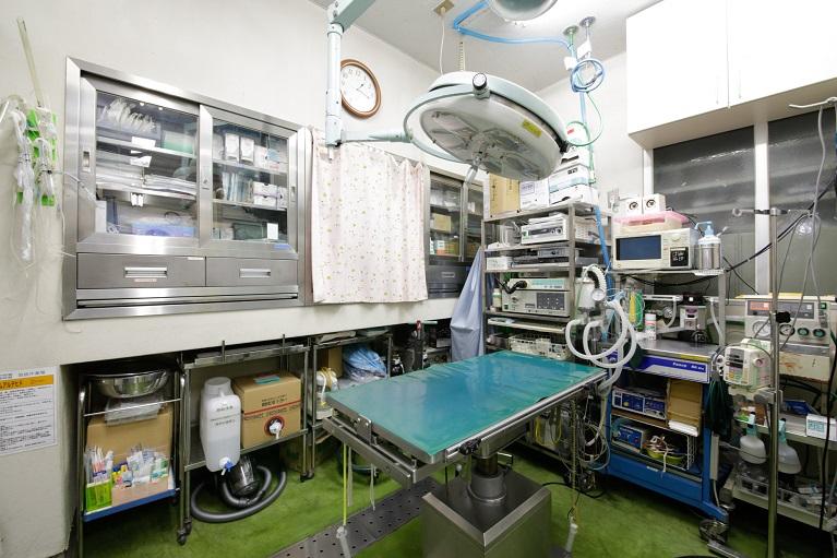 犬・猫・うさぎの避妊手術・去勢手術を行っております