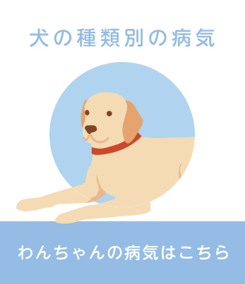 犬の種類別の病気