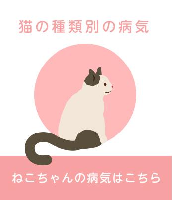猫の種類別の病気