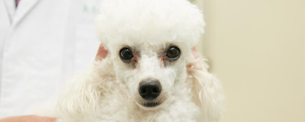 犬のがんが増えている